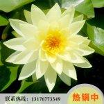 鱼台县志龙莲藕种植场