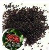 新采花椒种子 优质大红袍花椒种子 可做刺篱笆 批发